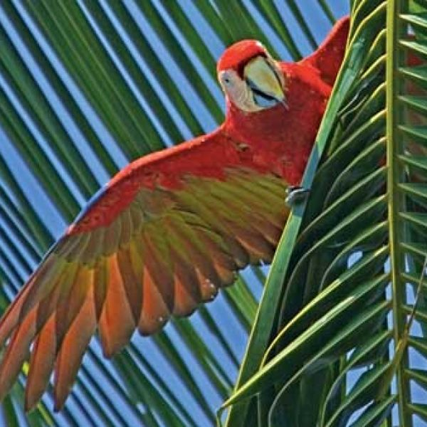 Explore Costa Rica Sweepstakes