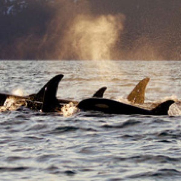 Alaska Cruise Sweepstakes!
